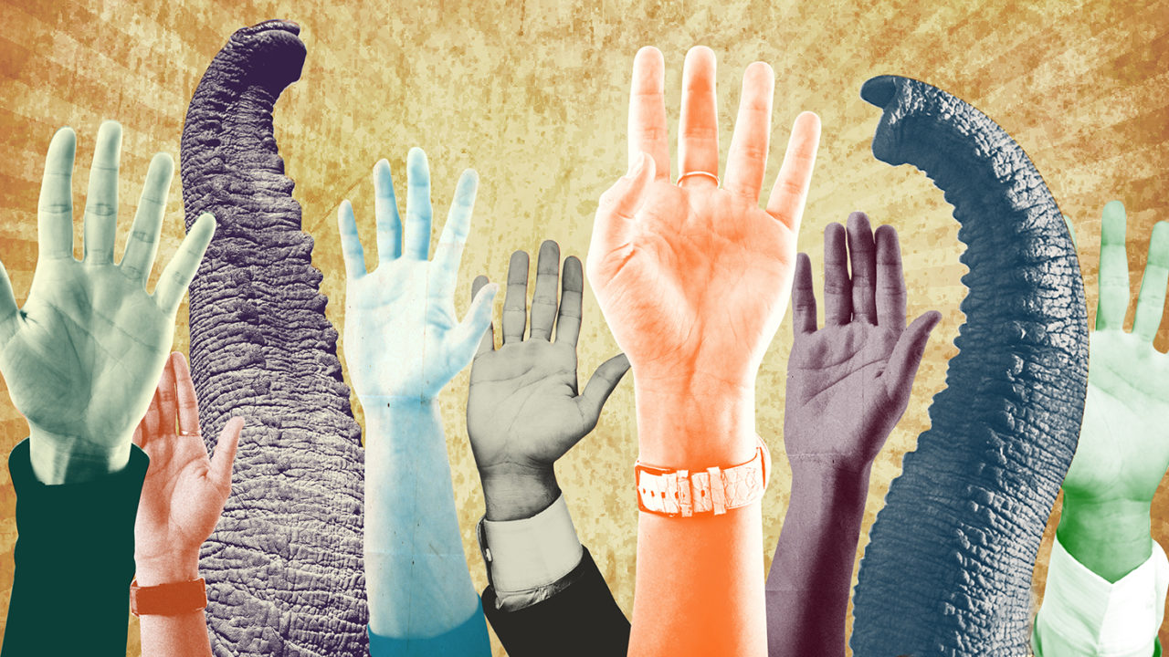 Abstract graphic of raised hands and elephant trunks